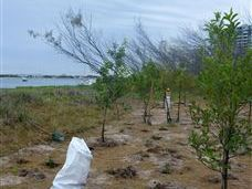 Volunteers needed for tree planting project