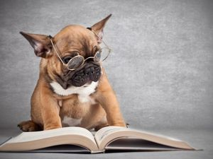 Adopt a pet or buy a book and support RSPCA and Lifeline