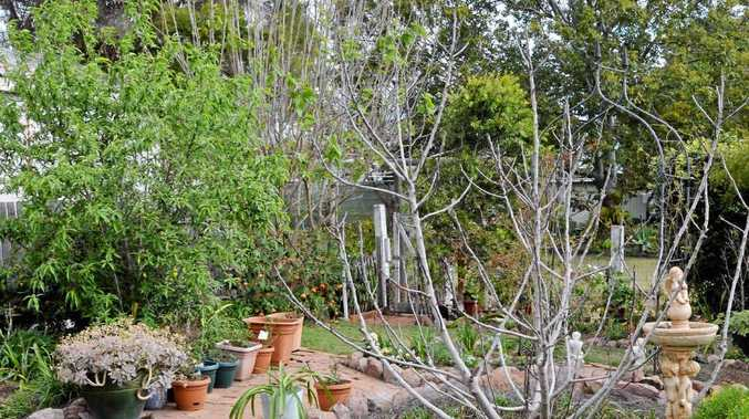 PRIZE: What was a bare yard five years ago is now a vibrant garden. This is what you could do to your yard thanks to a Daily Mercury giveaway.