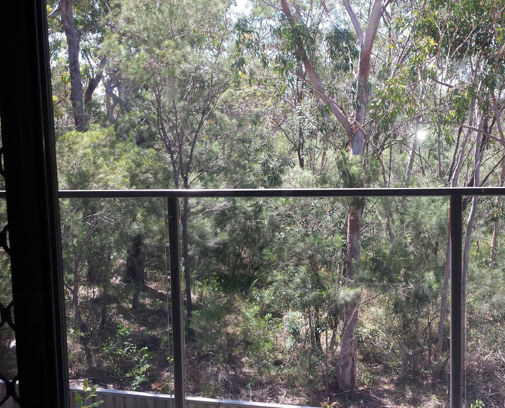 A photo taken from the same window before the trees were cleared.