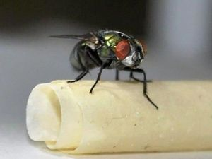 OPINION: Seek-and-destroy mission beaten by flies