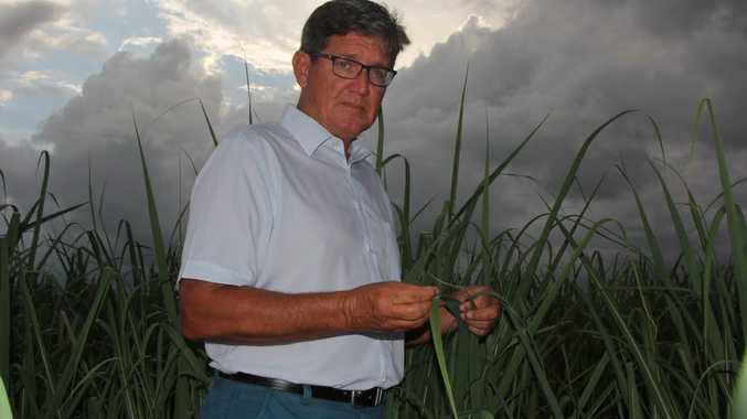 GOOD SEASON: Chair of the Prosperpine Cane Growers Glenn Clarke is grateful for recent rain. Photo Peter Carruthers / Whitsunday Times