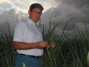 Growers warned dry could be 'new norm'