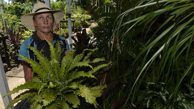 PLANT THEFT: Sue Riley has had a number of staghorn plants stolen from her business situated in Bells Road, Woongarra. Photo: Mike Knott / NewsMail