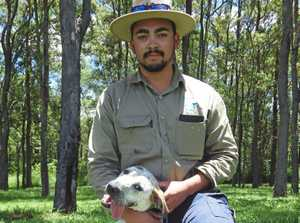 Richmond Valley Council Regulation Ranger Eddie Brown at Casino Dog Pound with Cleo, a Bull Arab Cross who urgently needs a home.