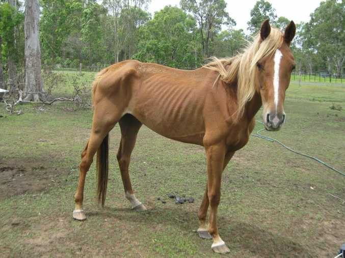 Aphrodite, one of the horses that was neglected.