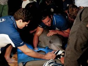Dolphin appears to show gratitude at being rescued