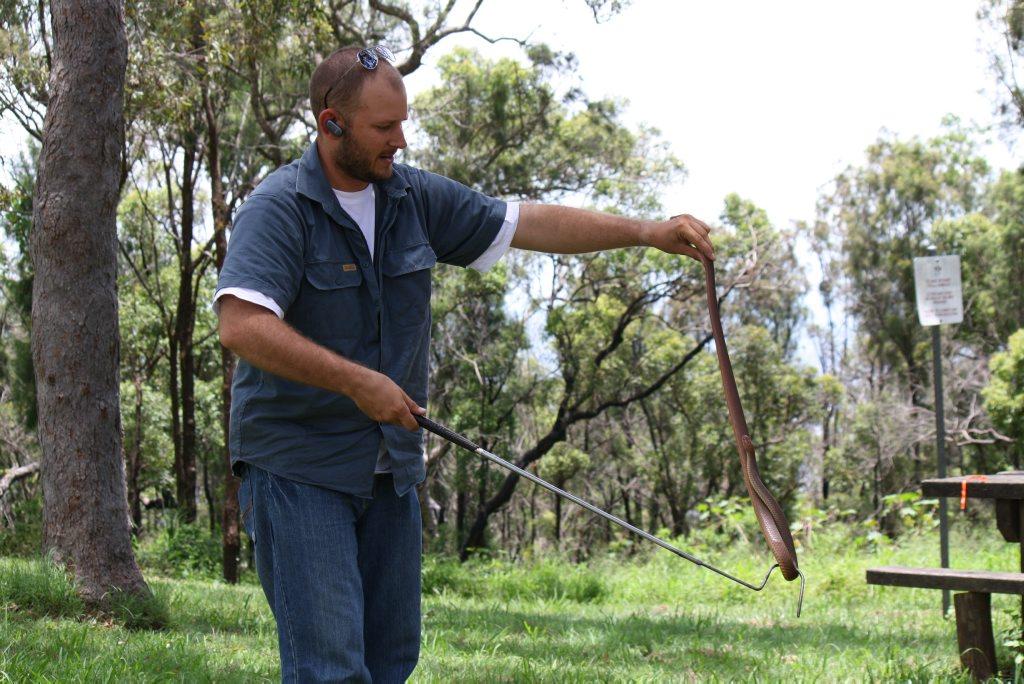SNAKING AROUND: Snake-catcher David Flack handles an eastern brown.