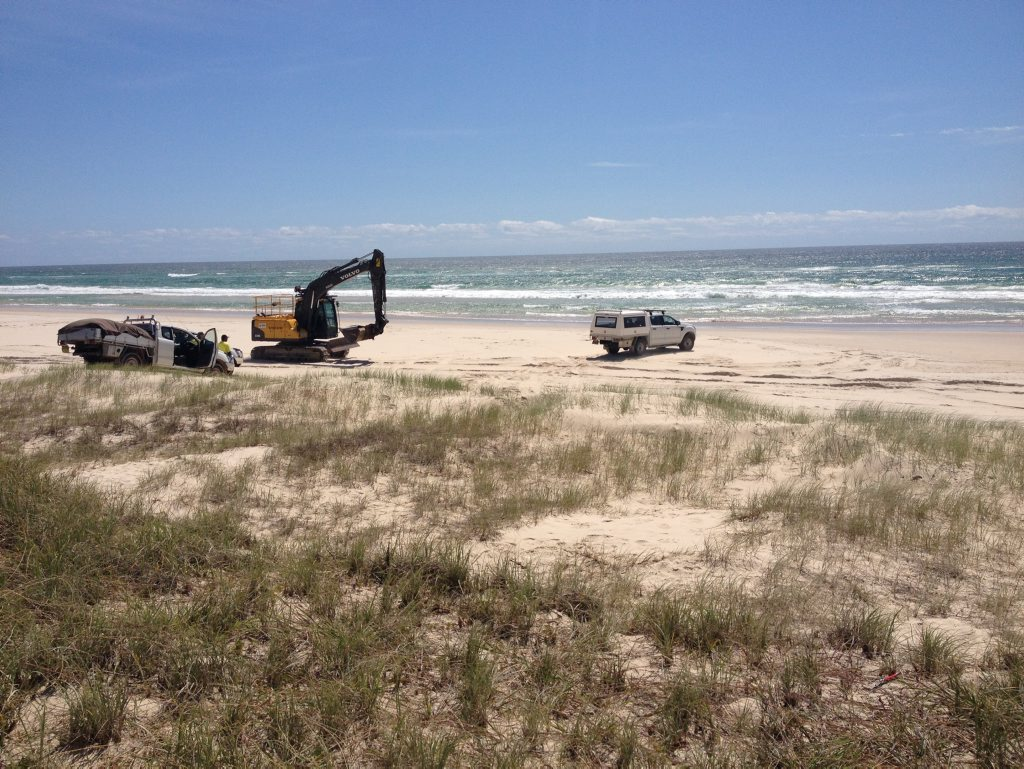 Council workers at the site on Casuarina Beach where the whale was exhumed