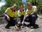 ENJOYING THE SUNSHINE: Maryborough's Aimee Watts, 18, Biggenden's Dyllann Carley, 20 and Torbanlea's Bradley Dawson, 18, tending to a sapling planted as part of their work to regenerate the Urraween conservation area.
