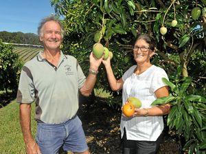 Sweet success for Coffs Coast mango growers