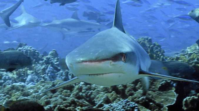 Surveillance for sharks will continue until Easter according to State MP. Photo: Contributed