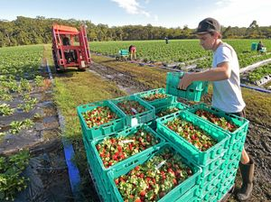 Seasonal workers in shortage on the Coffs Coast