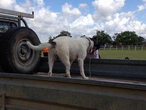 Casper jumps ahead in comp