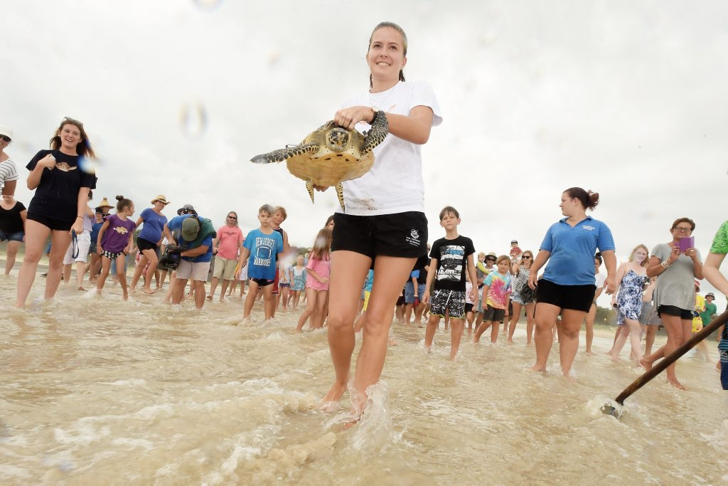 Kaitlyn Cavanagh, 19, of Alstonville, takes the turtle out to sea at Flatrock in Ballina in front of a large crowd. Photo Marc Stapelberg / The Northern Star