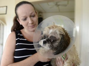 Gizmo gets urgent surgery thanks to random act of kindness