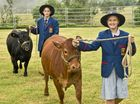 CLASSING CATTLE : Will Doyle ( Left )  and Lily Kemph look forward to the Downlands College Rural Centre holding a show cattle prep day for the start of the new show season. Thursday, Jan 28, 2016 .  Photo Nev Madsen / The Chronicle