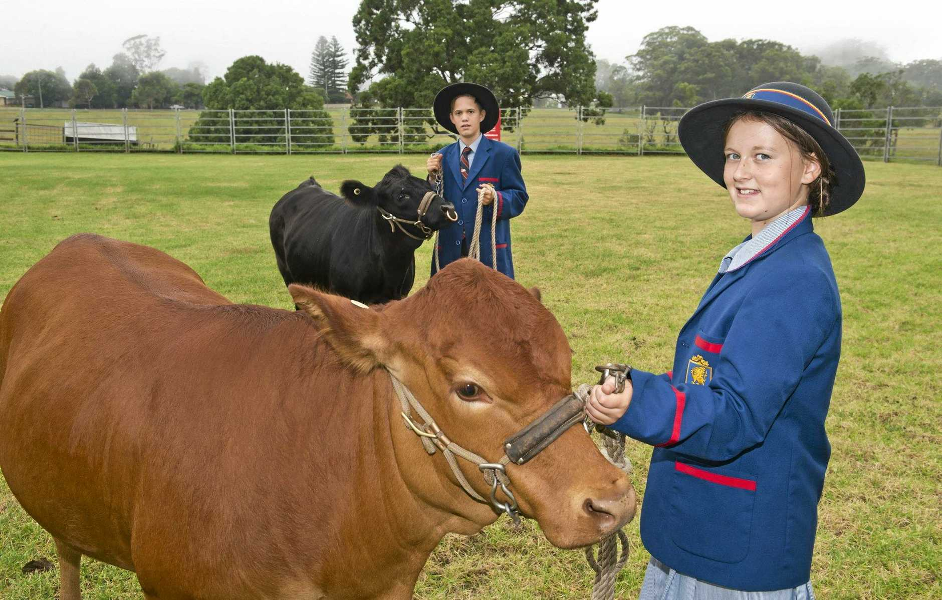 CLASSING CATTLE: Will Doyle (left) and Lily Kemph look forward to the cattle showing introduction day at the Downlands College Rural Centre.