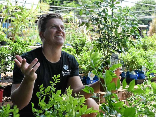 Many Mackay locals believe a flowering mock orange tree is a sure sign of rain, but at Calligan's Nursery yesterday Alex Jokovich couldn't find a single one in flower.