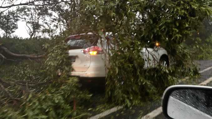 Tree falls on a car due to stormy weather