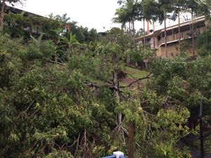 Sunshine Coast storm knocks tree on to house at Buderim
