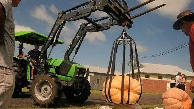 BIGGER, BIGGEST: The Summerland giant pumpkin competition held at Kyogle Showground on Saturday attracts heavyweights.