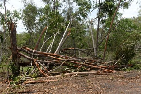 STORM WEATHER: Trees and property along Purkis Corner Road Maroondan were damaged by a tornado. Photo: Mike Knott / NewsMail