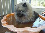Simba enjoying a swim