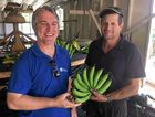 DPI Banana Industry Development Officer Matt Weinert and Woolgoolga banana grower Jeff Eggins.