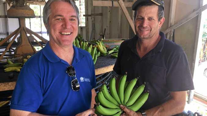 DPI Banana Industry Development Officer Matt Weinert and Woolgoolga banana grower Jeff Eggins.