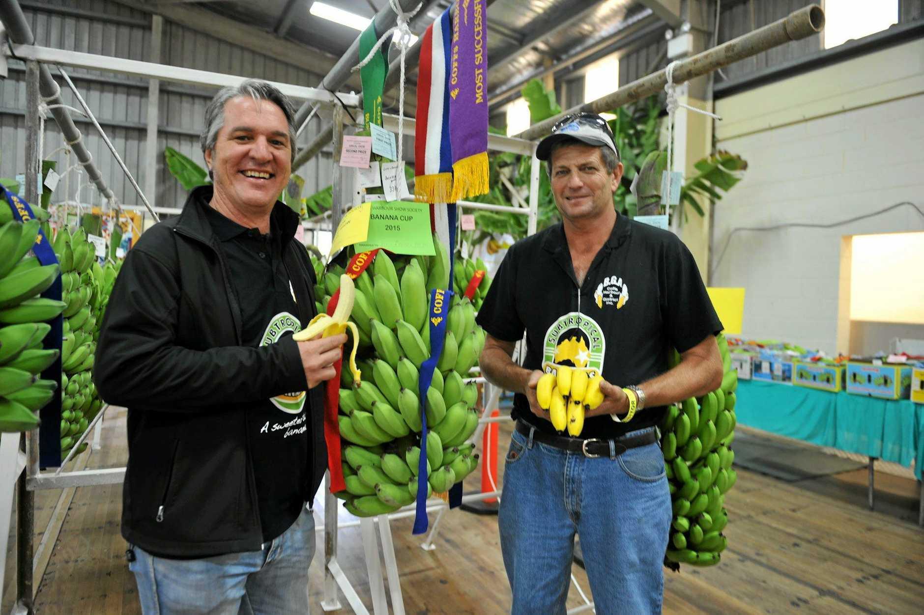 DPI Banana industry development officer Matt Weinert and grower Jeff Eggins Photo David Barwell / Coffs Coast Advocate