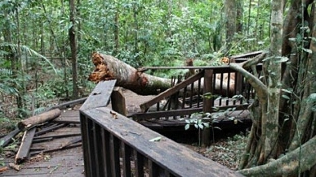 The Cathedral Fig Boardwalk in Far North Qld has been closed after being damaged. Photo: Queensland Government