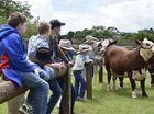 Introduction day on showing cattle for the local show circuit at Downlands College.