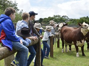 Introduction to showing cattle