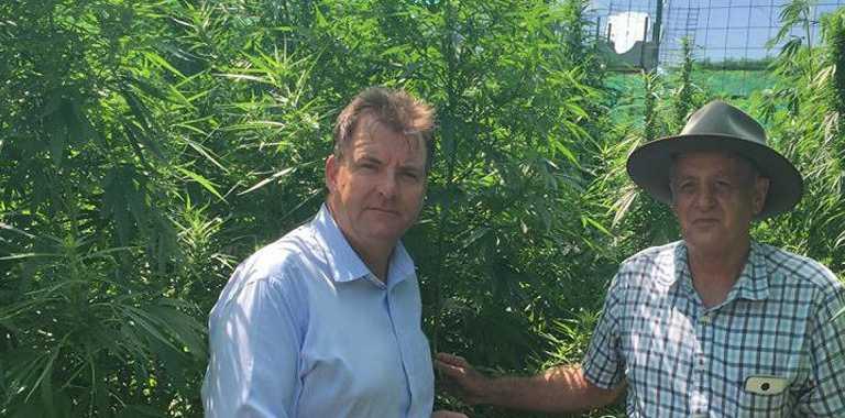 MEMBER for Burnett Stephen Bennett chats about the potential of exporting hemp.