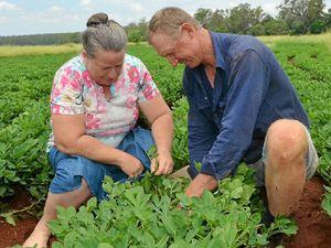 One-of-a-kind peanut farm in South Burnett