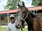 Grafton trainer Daniel Want with Don Caballo who will race in a Class One Handicap at Grafton on tuesday, 9th of February, 2016.Photo Bill North / Daily Examiner