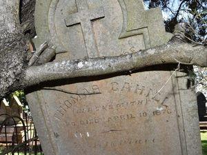 Invasive tree roots at Drayton Cemetery