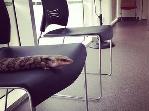 Sunshine Coast reptiles: Man's scaly, best friend