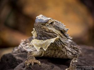 Wild reptiles of the Sunshine Co