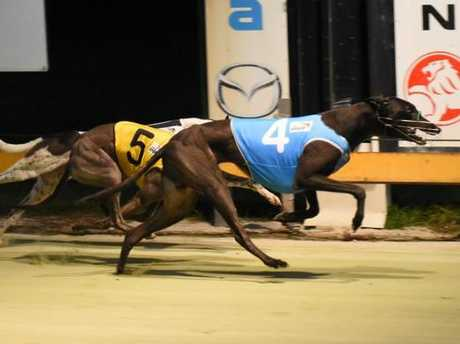 Scoop Tank beats home Meer Jappa and Alan's Kidz in a kennel trifecta for trainers Warren and Sonia Kempshall in the Coutts CC @ CRCA Relay Stakes (407m) at the CRCA Relay night at Grafton Greyhound Racing Club on Monday, 18th of January, 2016.Photo Robert Brandolini