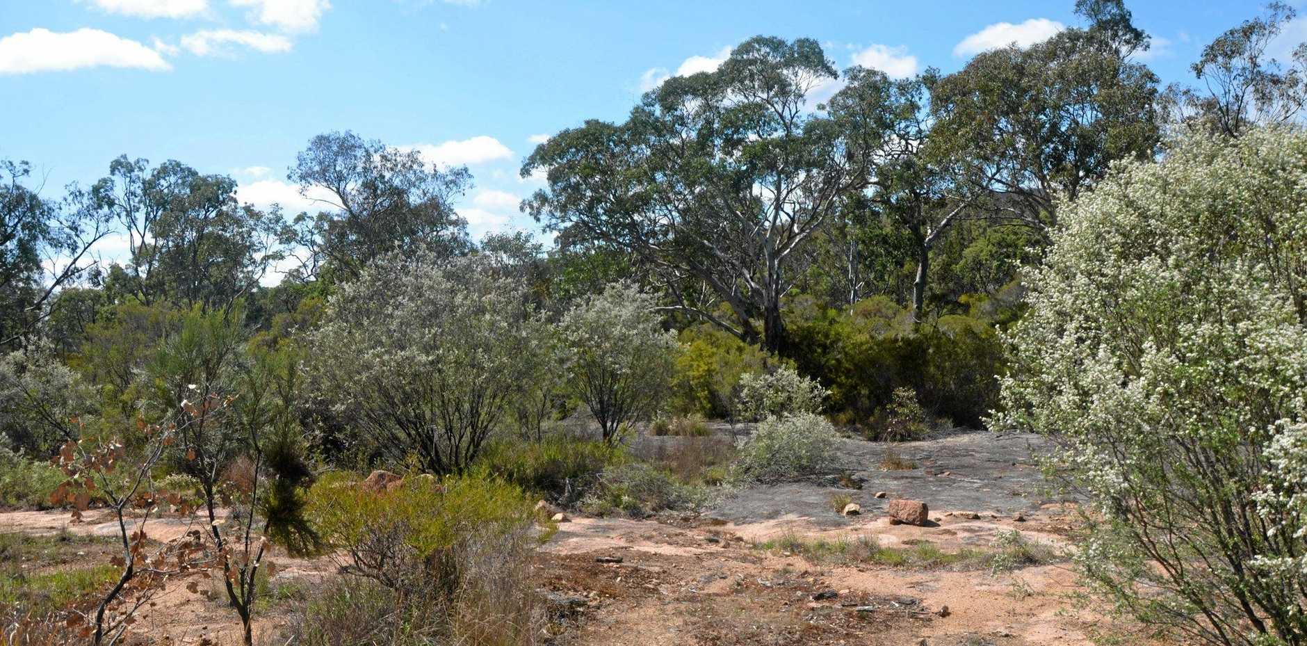 WORTH IT? The proposed Emu Swamp Dam site.