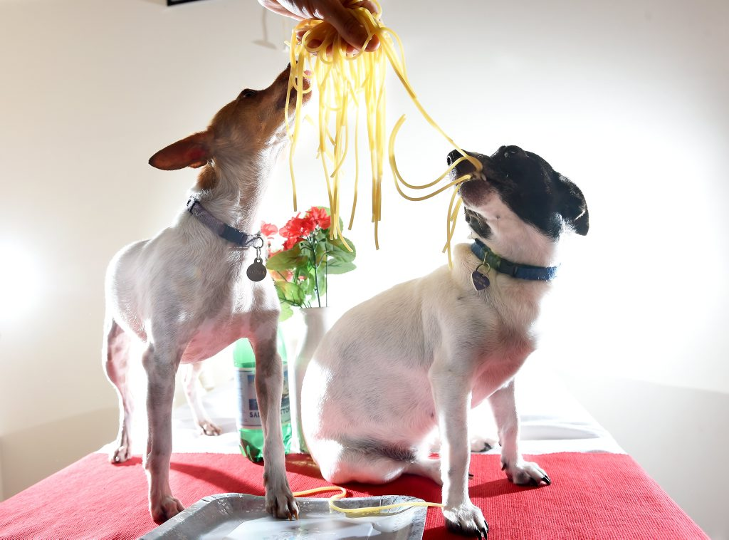 Rodga and Ruby celebrate Valentine's Day while their owners participate in the Petbarn pet dating afternoon. Photo Marc Stapelberg / The Northern Star
