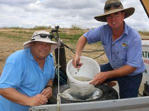Fingerlings a boost for Lockyer Valley waterways