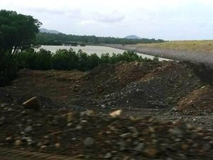 Why mangroves are being cleared at port