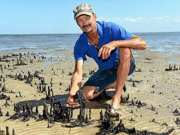 toxic algae washes up caboolture news