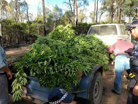 Over 60 large cannabis plants have been seized in Tara after police received information yesterday from Crimestoppers.