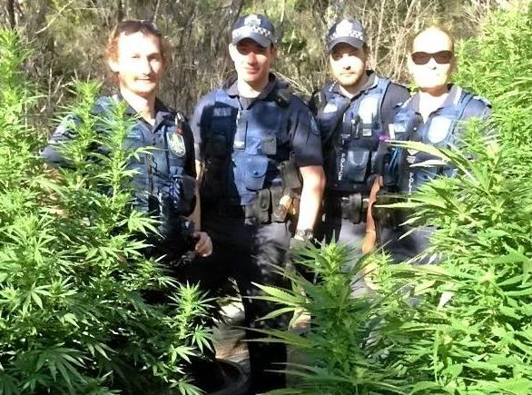 70 large cannabis plants were seized from a Tara property early yesterday evening.