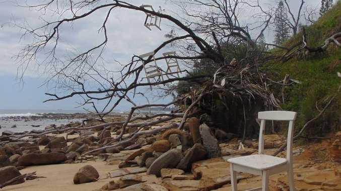 Chairs in a tree at Alexandra Headland. Just how this she-oak became a chairy-tree has some locals stumped.