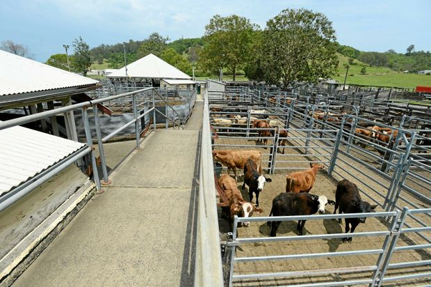 On Saturday, a special breeder sale will be held at the Lismore Saleyards.